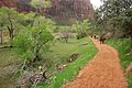 Easy Walk in Zion National Park (3444012904).jpg