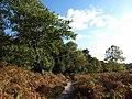 Edge of Ridley Wood - geograph.org.uk - 1544956.jpg