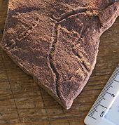 Ako sa uhlíkové datovania používa na určenie veku fosílií