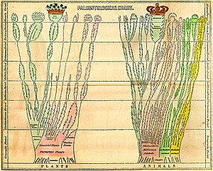 Tree of life (biology) - Fold-out paleontological chart of Edward Hitchcock in 'Elementary Geology' (1840)