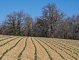 Elburgo - Bosque y campo 02.jpg