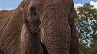 Elefante en el Zoologico de Barquisimeto.jpg