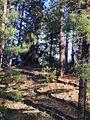 Elk on the Haulapai Reservation - panoramio.jpg