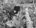 En grønnsakshave i Anchorage. Solen, døgnet rundt, driver frem blomster og grønnsaker av utrolig størrelse i Alaska. Kålhoder kan veie 25 kilo. (5263456008).jpg