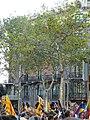 Enric Batlló P1150787.JPG