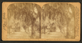 Entrance to St. Augustine, Florida, from Robert N. Dennis collection of stereoscopic views 2.png