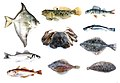 Er komen veel vissoorten voor maar ook krabben.jpg