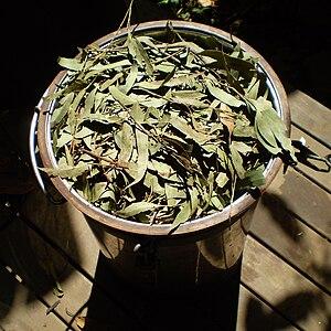 Eucalyptus olida - Image: Eucalyptus olida distillation 1
