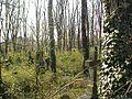 Evangelický hřbitov ve Strašnicích 1.jpg