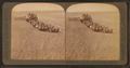 Evolution of the sickle and flail, 33 horse team combined harvester, Walla Walla, Washington, from Robert N. Dennis collection of stereoscopic views.png