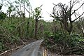 FEMA - DR4340 364 - Debris Remains in Roadways in St. Croix.jpg