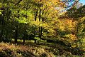 Fall-Foliage-Forest-Trees-Leaves - West Virginia - ForestWander.jpg