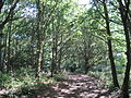 Featherstone Hill.JPG