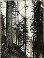 Feindlicher Beobachtungsstand am Hang der ¤ 1142. (BildID 15419583).jpg