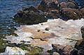 Ferdynand Ruszczyc - Krym - brzeg morza - Google Art Project.jpg