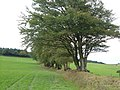 Field boundary on Burley Down - geograph.org.uk - 250231.jpg