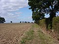 Field north of Butler's Wood - geograph.org.uk - 1463583.jpg