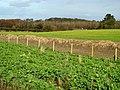 Fields, near Portavo - geograph.org.uk - 702806.jpg