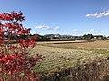 Fields near Buzen-Kokubunji Ruins 4.jpg