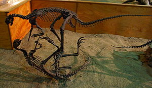 Othnielosaurus - Casts mounted as if fighting, Wyoming Dinosaur Center