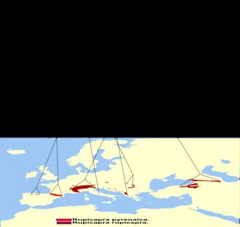 350px-Filogeographia_of_Rubricapra_ssp_Map.png