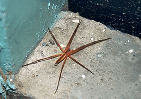 Fishing Spider.JPG