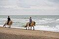 Fjord Horses in Denmark 2009.jpg
