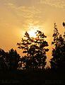 Flickr - HuTect ShOts - Nature Overlap - El.Mansoura - Egypt - 03 08 2010.jpg