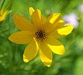 Flickr - Michael Gwyther-Jones - Garden Flower (2).jpg