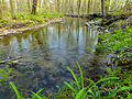 Flickr - Nicholas T - Little Bushkill Creek (1).jpg