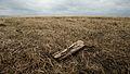 Flickr - USDAgov - 20130501-NRCS-LSC-0620.jpg