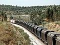 Flickr - nmorao - Carvão, Azinheira dos Barros, 2008.08.01 (1).jpg