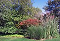 Flora (6176106290).jpg