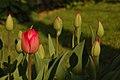 Flore de Bercy 10.JPG