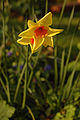 Flore de Bercy 15.JPG