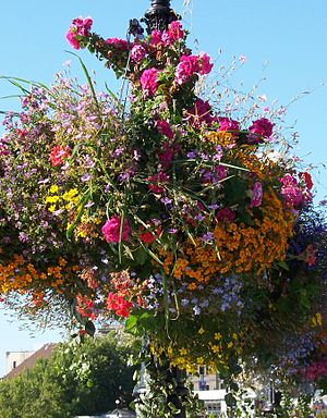 A hanging flower basket on the street in Victo...