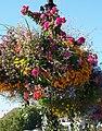 Flower-basket-victoria-BC.JPG