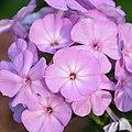 Flower (215167183).jpeg