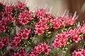 Flower (41995535331).jpg