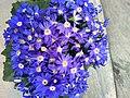 Flower 37 HDR.jpg