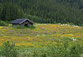 Flower meadow - 2 (2689184078).jpg
