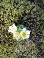 Flower white (1408208066).jpg