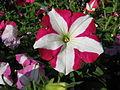Flowers (215).jpg