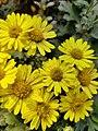 Flowers and plants..jpg