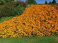 Flowers at Peace Arch Park (15140689489).jpg