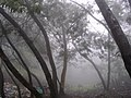 Fog and trees 1.jpg