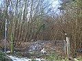 Footpath in Cobhambury Wood - geograph.org.uk - 1118177.jpg