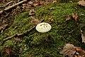 Forêt Départementale de Méridon à Chevreuse le 29 septembre 2017 - 44.jpg