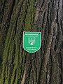 Forchtenstein - Rosalia - Naturdenkmal MA-005 - 2 Winterlinden III.jpg