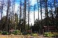 Forest (133422041).jpeg